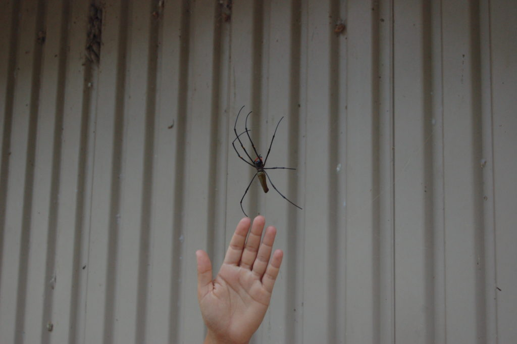 In Australia spiders kill you